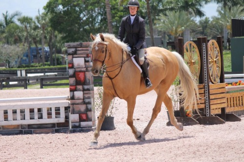 horse-and-rider:  He's so attractive.
