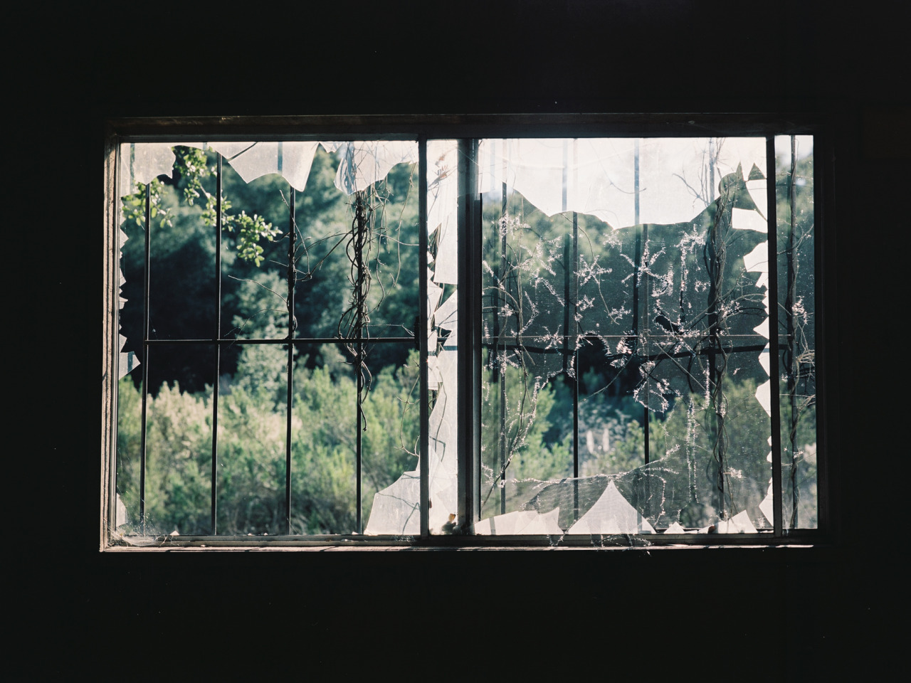 neithernor:  window treatment, California, 2013