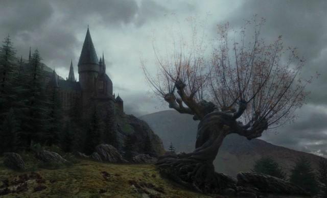 // #Harry Potter#Hermione Granger