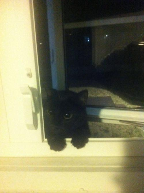 awwww-cute:  Had my window open to have a smoke when I suddenly heard meowing