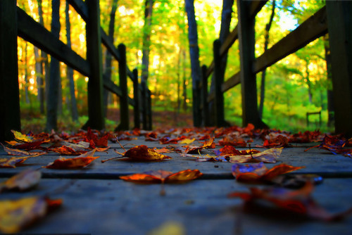bluepueblo:  Forest Bridge, Brown County Indiana photo via thefog