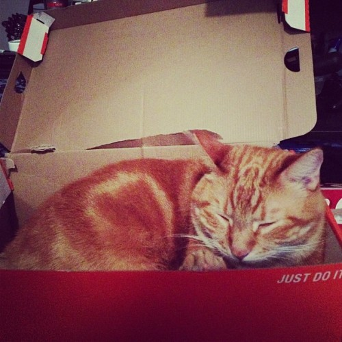 Sleeping Moe in his box. #cute #kitten #shoebox #nike #tiredcat #purring