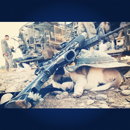 thepoetproject:  Pistol under the pillow… Puppy under the AK