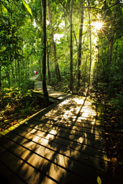 Walking in Nature - MacRitchie Reserve, Singapore | by ChKESE