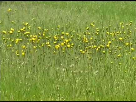 video frame from home movies/notes.   —- dandelions —-