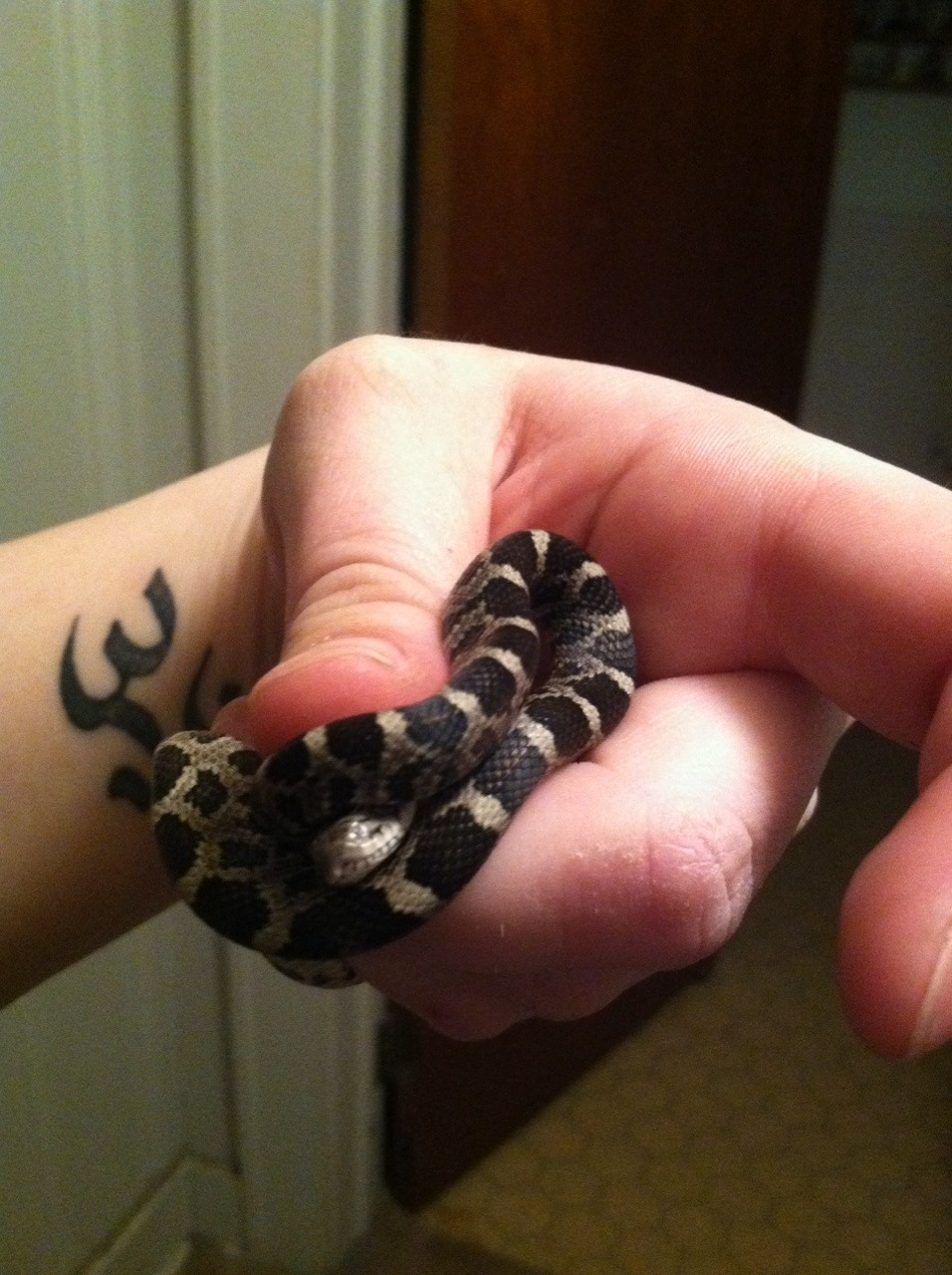 this is the second one of these little babies that I've caught today - one at my grandmothers outside, and now at my house.. this one was slitherin' through my hallway haha. took it outside and let it go, it was a cute little thing.