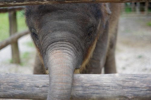 6 month old baby elephant