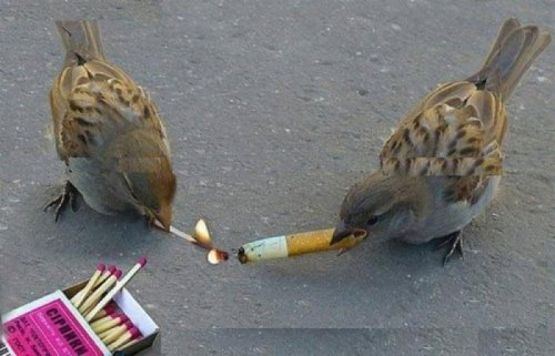 Birds Taking a Smoke Break Teaching them how to quit is a whole different story.