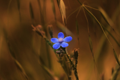 ♡ Little blue ツ by A-zaghamim photography