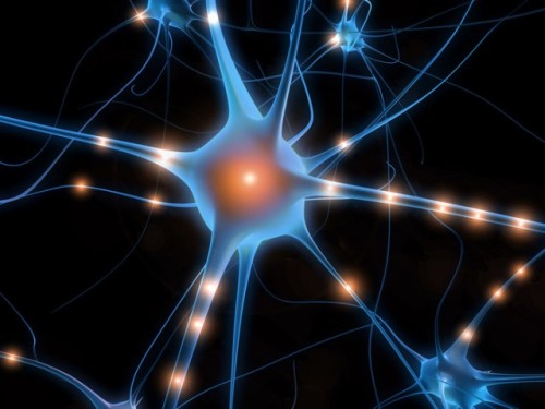 """Neuristors"" Simulating the Behavior of Neurons On Silicon   Computing hardware is composed of a series of binary switches; they're either on or off. The other piece of computational hardware we're familiar with, the brain, doesn't work anything like that. Rather than being on or off, individual neurons exhibit brief spikes of activity, and encode information in the pattern and timing of these spikes. The differences between the two have made it difficult to model neurons using computer hardware. In fact, the recent, successful generation of a flexible neural system required that each neuron be modeled separately in software in order to get the sort of spiking behavior real neurons display. But researchers may have figured out a way to create a chip that spikes. The people at HP labs who have been working on memristors have figured out a combination of memristors and capacitors that can create a spiking output pattern. Although these spikes appear to be more regular than the ones produced by actual neurons, it might be possible to create versions that are a bit more variable than this one. And, more significantly, it should be possible to fabricate them in large numbers, possibly right on a silicon chip.  (via ""Neuristor"": Memristors used to create a neuron-like behavior 