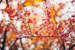 serendipity-precious:  Autumn's true self by Thuyhn on Flickr.