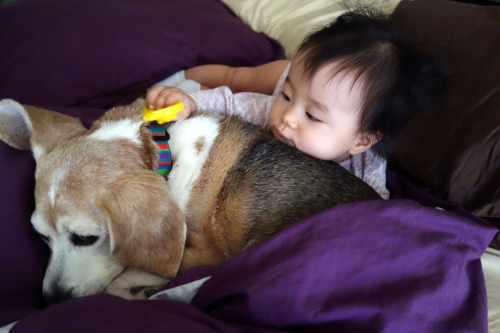 Day 223. Eva loves her beagle dog, Saidee. She just wants to pet and snuggle with Saidee all the time, but as followers of this Tumblr know well, Saidee merely tolerates Eva enough not to get grouchy with her.