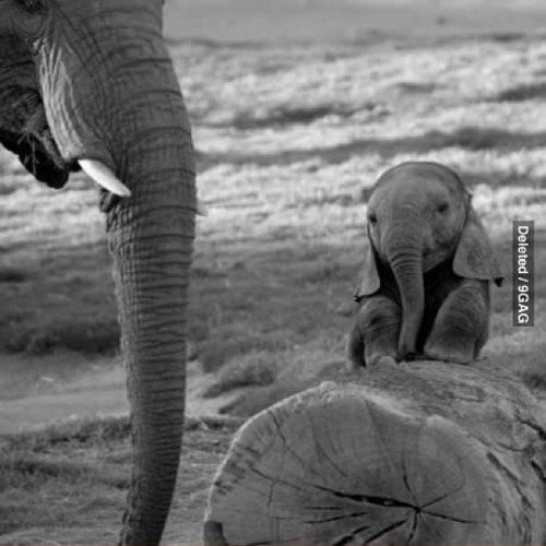Baby elephant  So adorable….