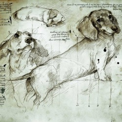 DaVinci had Dachsunds. Who knew?  ;-) pinterest.com