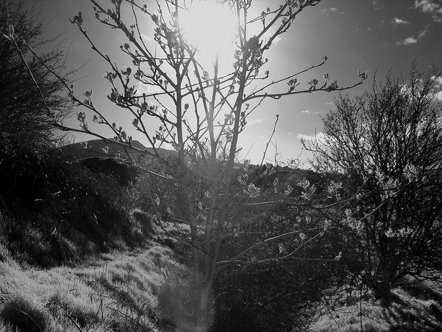 Tree on Flickr. Casio Exilim EX-Z1080, IR Converted Flash, Neewer R72 filterPhotography BlogTumblr BlogSociety 6