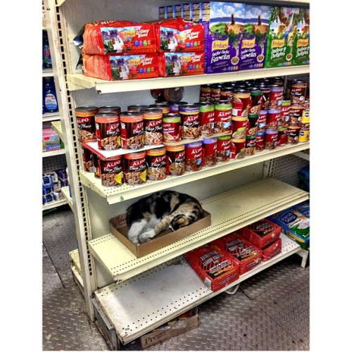 notquitehuman-notquitedalek:  timothydelaghetto:  iamjoanlee:  *NY BODEGA* So i asked the worker for the pasta isle and i see this REAL cat laying up on this counter! WTF?! Is this a normal NYC thing?  LMAO… yo…   It's not a real NYC bodega if there's no cat, man.  Ahaha love this! It's the truth!
