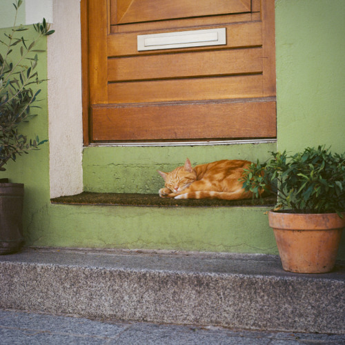 """Sleeping Cat"" Photo prise à Paris, Yashica 124G"
