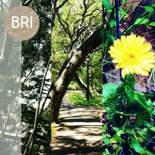 April #BriPositive: 22. Mother Earth (via @ohmankeshi @jmaaaaa @bripositive) #goBIGGER #sustainability #EarthDay #MotherEarth #GoGreen #photoaday #photochallenge