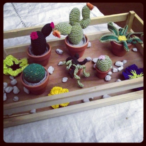 kreativo1955:  Piantine grasse all'uncinetto. #crochet #cottonclub #plants #hobby #handmade
