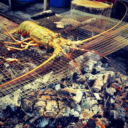 grillin' #giweats #lobster #giwboating  (at Sri Lintau Fish Farm)