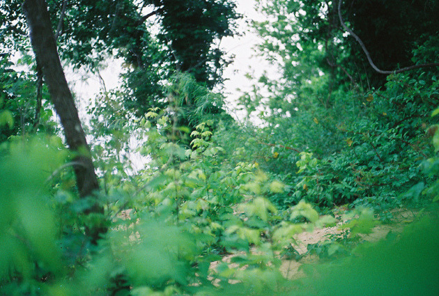 arquerio:  texas plants by Native | Aura on Flickr.