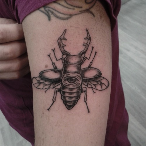 stag beetle tattoo | T...