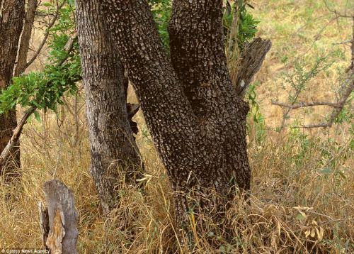 gyandarshan:  Man vs. nature- can you see through camouflage? Test your eyes and spot these hidden animals. http://bit.ly/13FuMgl