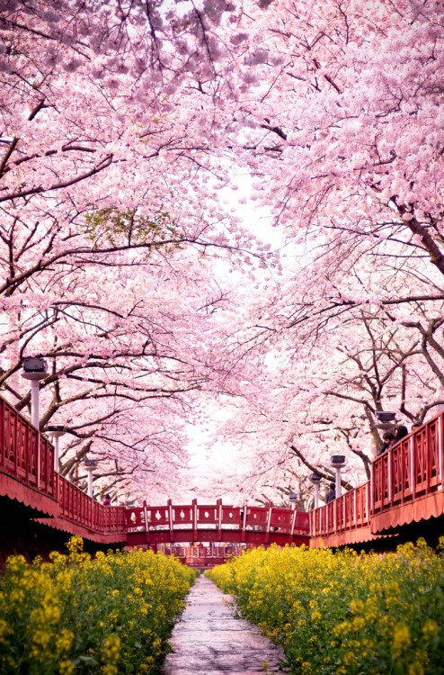 ethertune:  romance bridge (By beckim79)