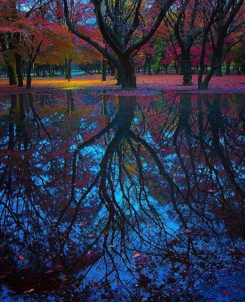 hungariansoul:  bluepueblo:  Reflection, Tokyo, Japan photo via breann  ♥