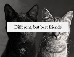 """Different, but bestfriends."""