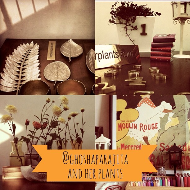 Please do check out @ghoshaparajita 's gallery and her website, bookyourplants.com. Some amazing stuff is going to come up there in the coming months. Check out the Facebook page at Facebook.com/bookyourplants  (at Bangalore)