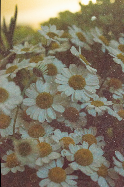alternative-everywhere:  old flowers on We Heart It - http://weheartit.com/entry/49922040/via/ValeriiaSykesGaga