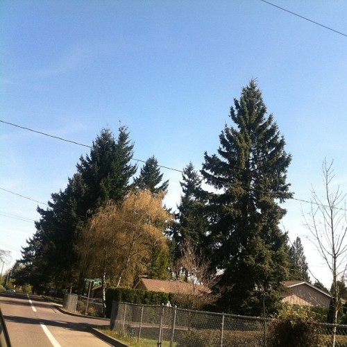 Lookin nice out! Missin it bad here. :/ #Oregon #missingit #loveithere #movinback #assoonasimoldenough