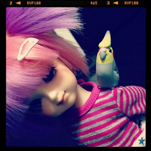 Little Lina's got her pet cockatiel, Groose, with her. :3