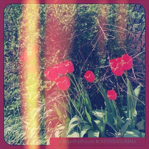 """ Good evening! "" ; NEYNE:BLOMMA & J.HopeForFuture #neyneblomma #flower#red"