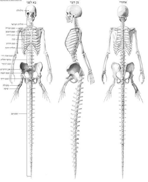 Anatomía de una sirena | La pura variedad