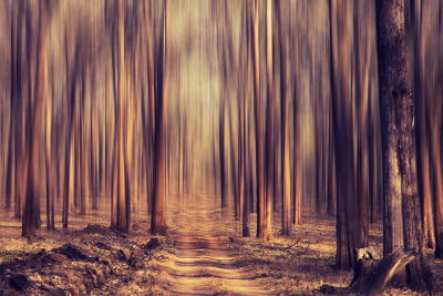 brutalgeneration:  Forest dream! (by VinothChandar)