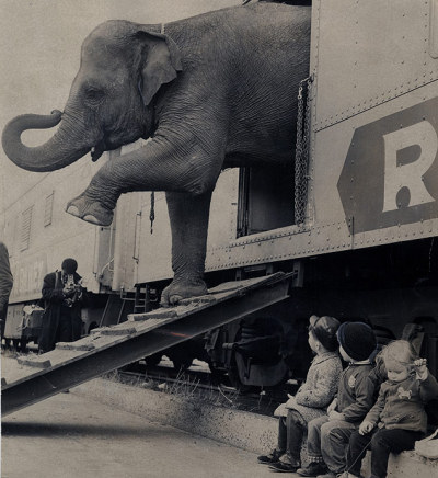 adamselinherdress:  bygoneamericana:  Targa the elephant disembarks from the Ringling Bros. circus train in the Bronx as most of her young visitors watch. New York, 1963. By Paul Rice  Someone take me to a circus plz