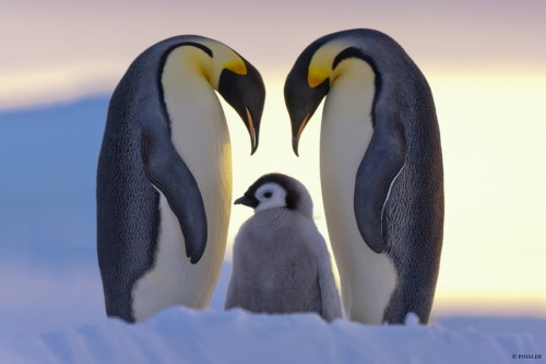 theanimalblog:  Parents Love. Photo by Annelise and Claus Possberg  :)