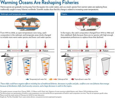 More on fisheries, this time in the form of a graphic by The Pew Charitable Trusts' ocean science division, based on a recent letter in the journal Nature! Signature of ocean warming in global fisheries catch @ Nature via Living Oceans Society
