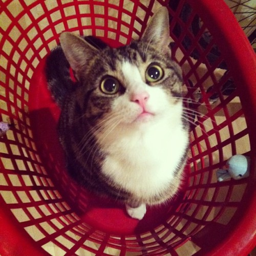 Kitten in a basket #cat