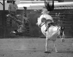 smithsonianmag:  Photo of the Day: A horse bucks off a rider at the Clallam County Fair in Washington State Photo by Roy Okano (Honolulu, HI); Clallam, WA