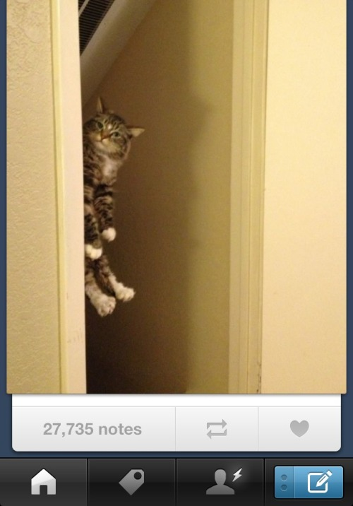27,000+ notes for my photo of Shorty??