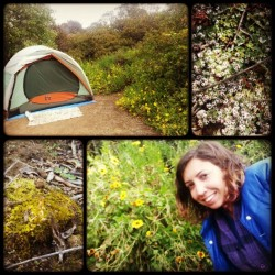 #morning at the #campground #camping #tent #moss #nature #flowers #mmm #CA  (at Leo Carrillo Campground)