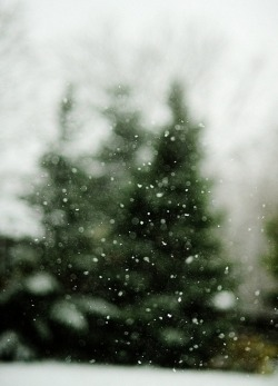Christmas photography winter film hipster indie nature bokeh vertical