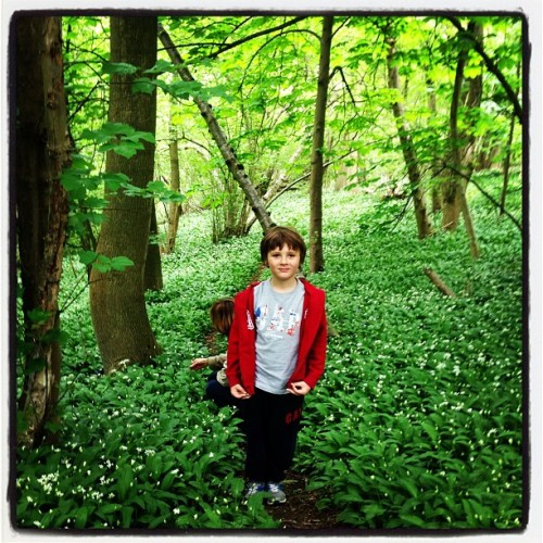Smallcombe Wood carpeted by #wildgarlic #Bath #England #springtime  (at Bath Skyline)