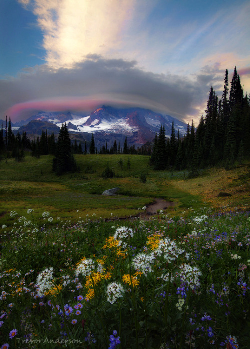 woodendreams:   (by Trevor Anderson)