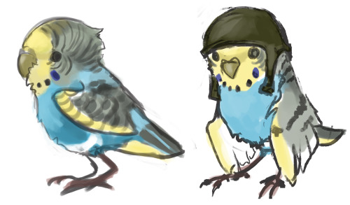 alradeck:  So i've been thinking of making a budgie character modeled after my first bird/ most awesome pet ever (not that kitt romney's not without his charms but this bird'll always have a place in my heart)  She wouldn't be any larger than a regular budgie, but i'm trying to figure out what sort of job she could have. Been thinking daredevil, but that's already somewhat taken by my main character :D Tell me your suggestions!