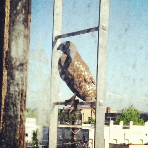 #falcon #pdx  (at Towne Building)