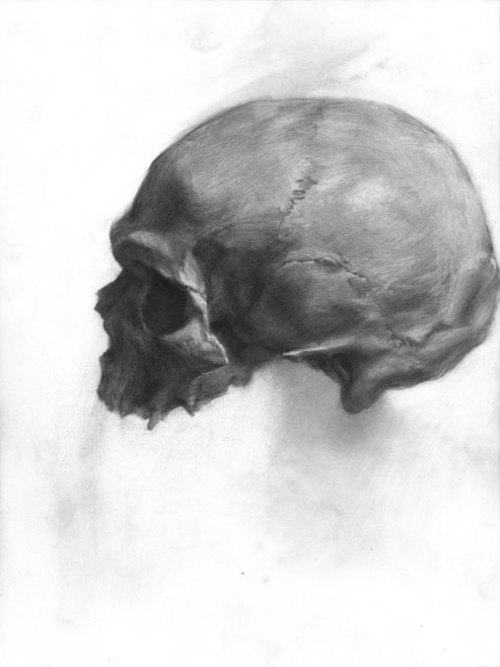 Evan Kitson Study of a Skull Graphite on paper 2013